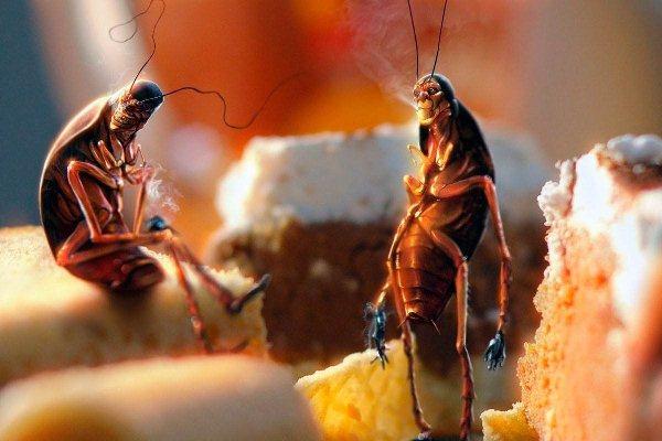 تفسير رؤية الصراصير في المنام