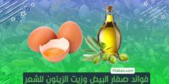 فوائد صفار البيض وزيت الزيتون للشعر