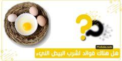 ما هي فوائد البيض المقلي